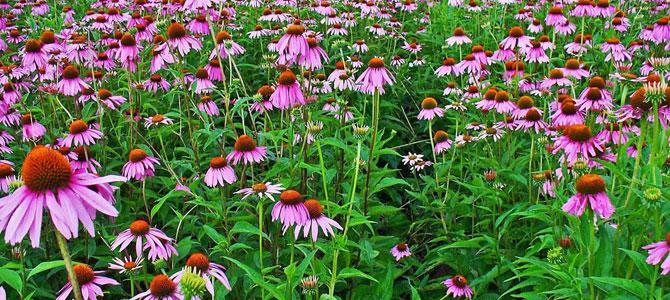 Garden Tips September