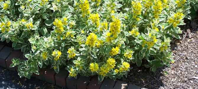 Garden Tips June July