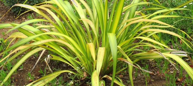 Garden Tips January February