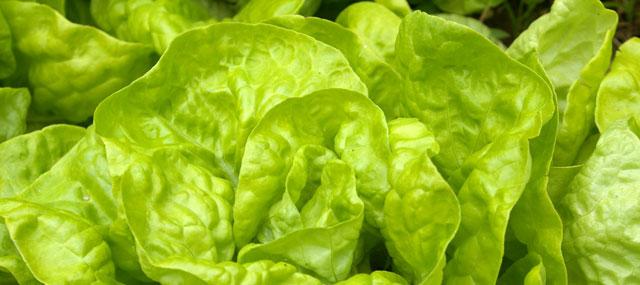 Organic Garden Tips April – April showers bring May salads