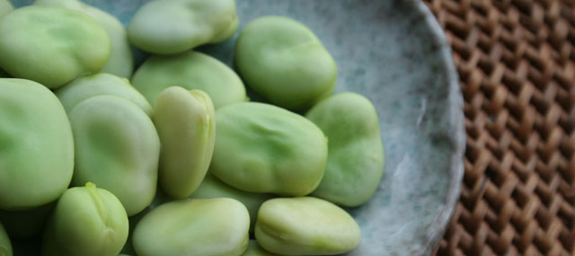 Organic Garden Tips December – Time to Sow Broad Beans