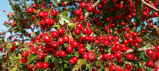 Garden Tips October November